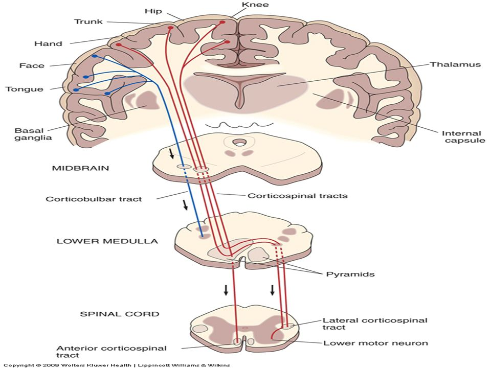 Amyotrophic Lateral Sclerosis (ALS) Definition – A devastating neurologic disorder that selectively affects motor function – The disease typically follows a progressive course, with a mean survival period of 2–5 years from the onset of symptoms.
