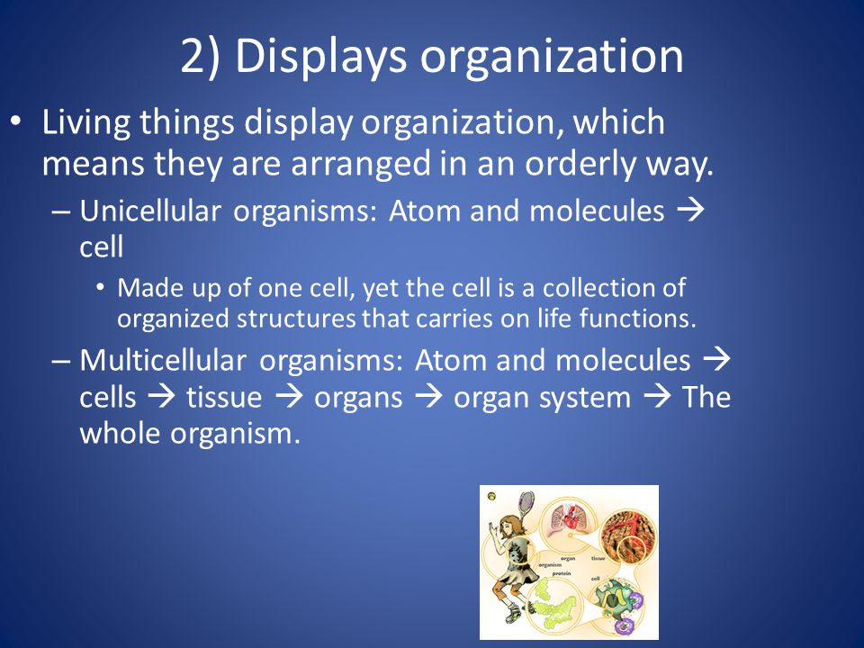 2) Displays organization Living things display organization, which means they are arranged in an orderly way. – Unicellular organisms: Atom and molecu