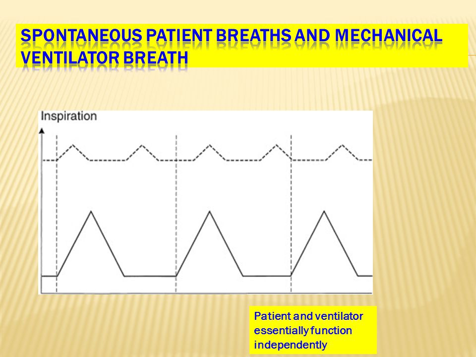 Patient and ventilator essentially function independently