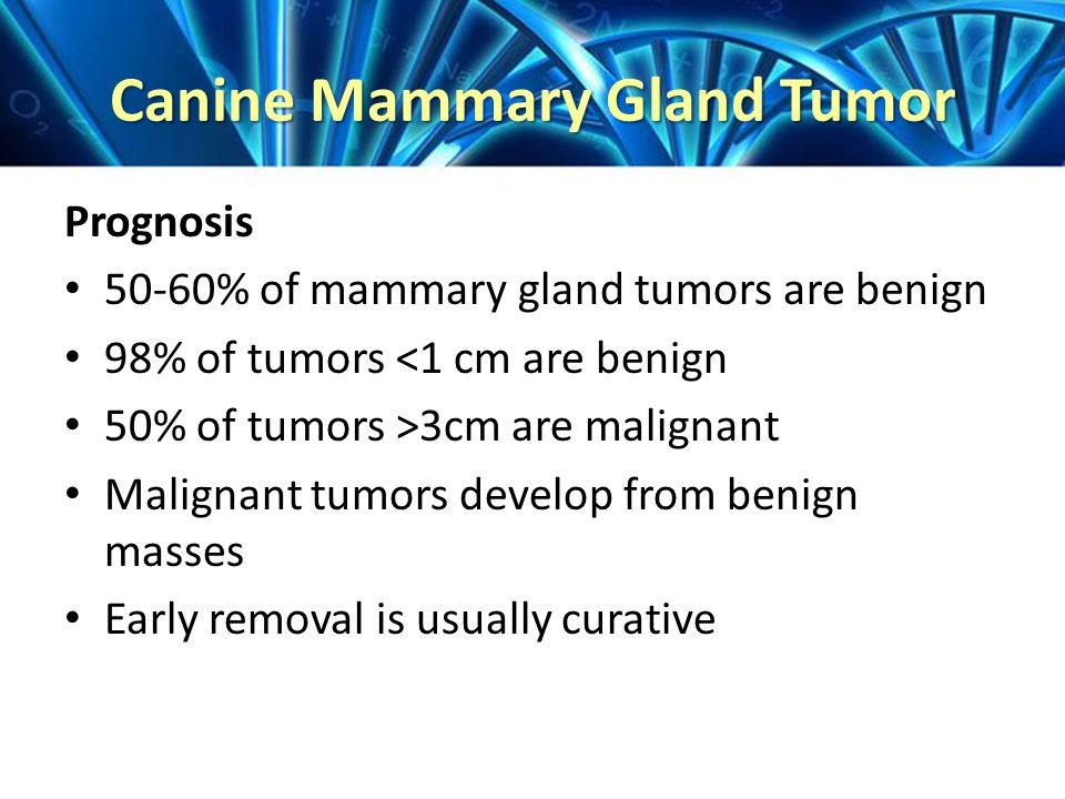 Canine Mammary Gland Tumor Prognosis 50-60% of mammary gland tumors are benign 98% of tumors <1 cm are benign 50% of tumors >3cm are malignant Malignant tumors develop from benign masses Early removal is usually curative