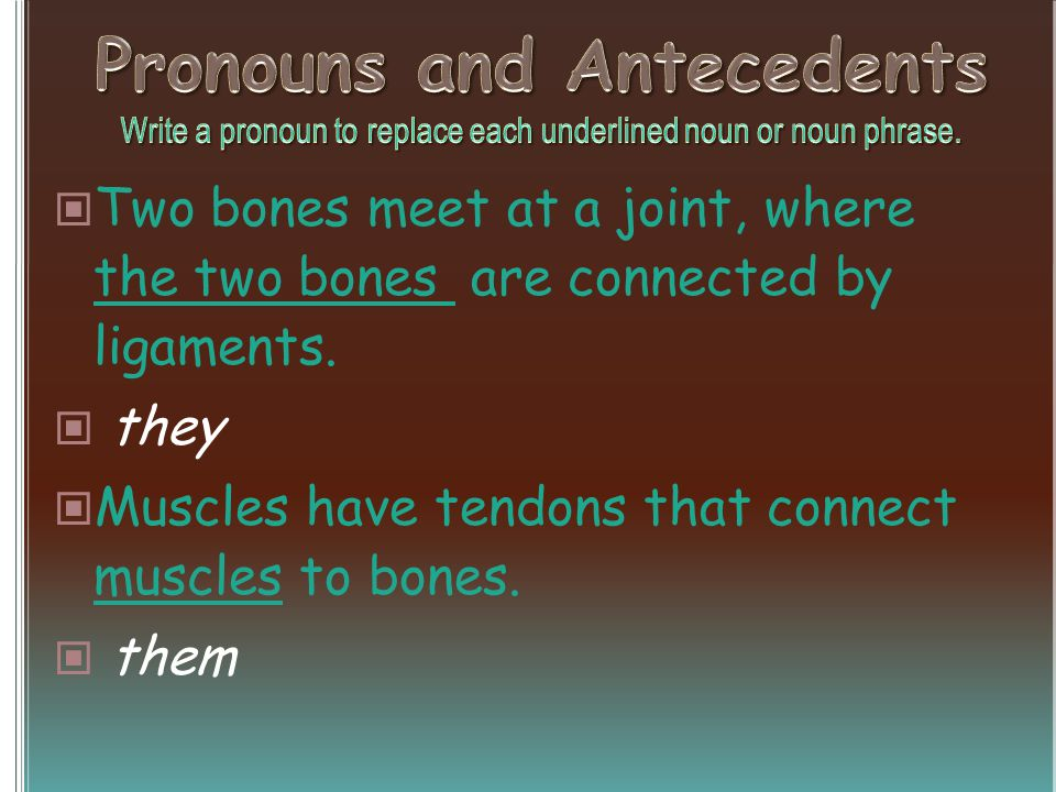 Two bones meet at a joint, where the two bones are connected by ligaments.