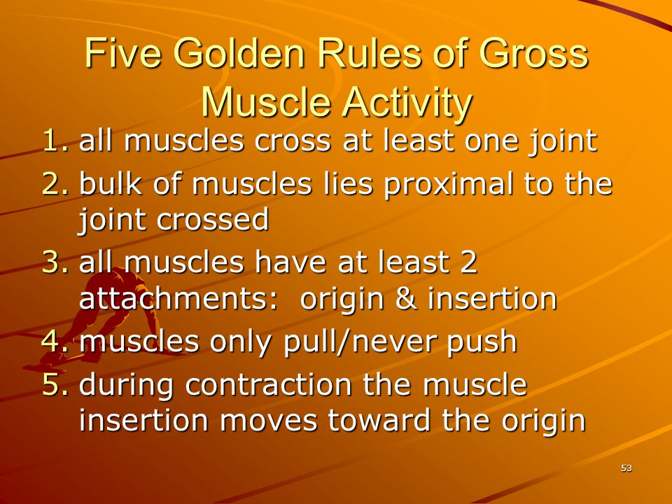 Five Golden Rules of Gross Muscle Activity 1.all muscles cross at least one joint 2.bulk of muscles lies proximal to the joint crossed 3.all muscles h
