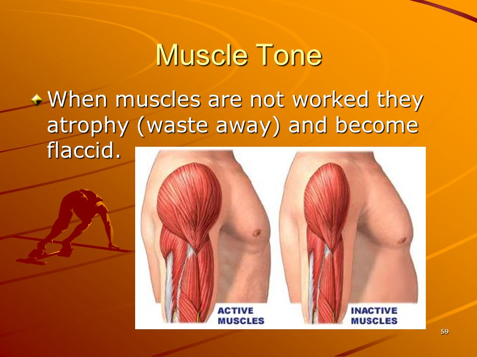 Muscle Tone When muscles are not worked they atrophy (waste away) and become flaccid. 59