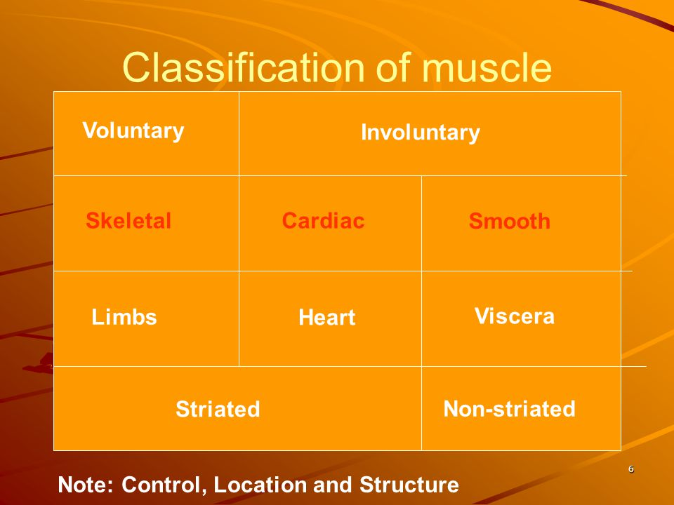 Classification of muscle Voluntary Involuntary Limbs Heart Viscera Striated Non-striated SkeletalCardiac Smooth Note: Control, Location and Structure