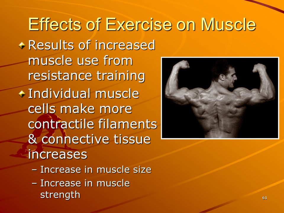 Results of increased muscle use from resistance training Individual muscle cells make more contractile filaments & connective tissue increases –Increa