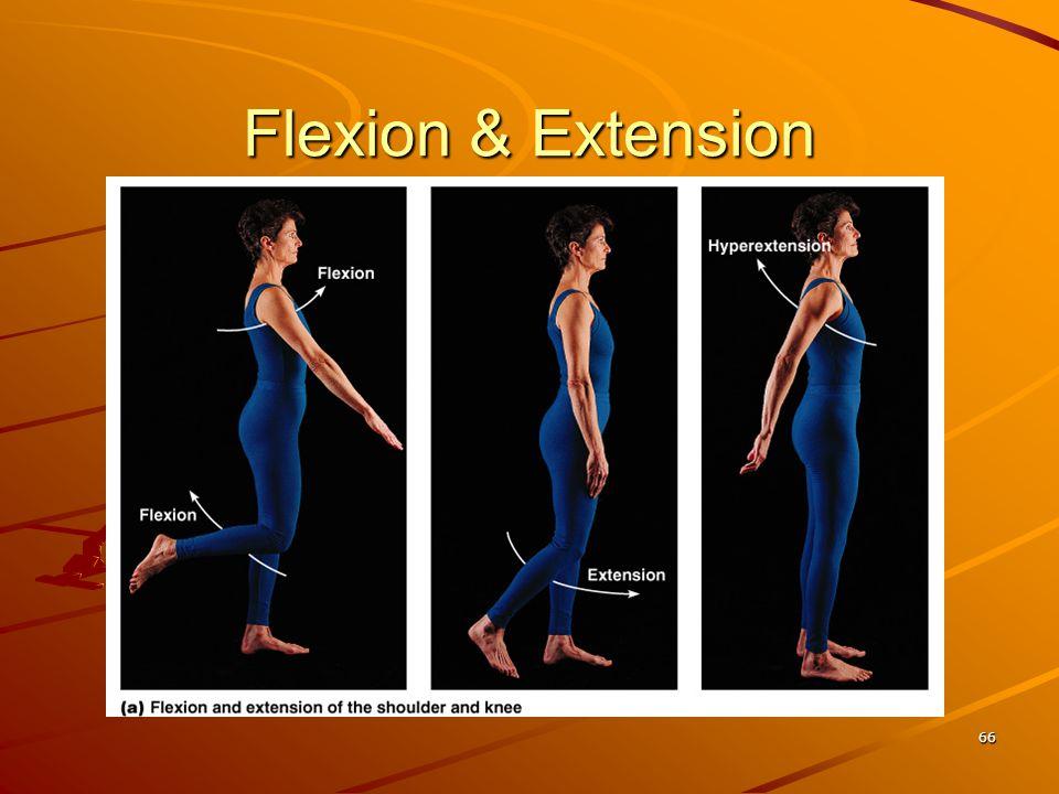 Flexion & Extension 66
