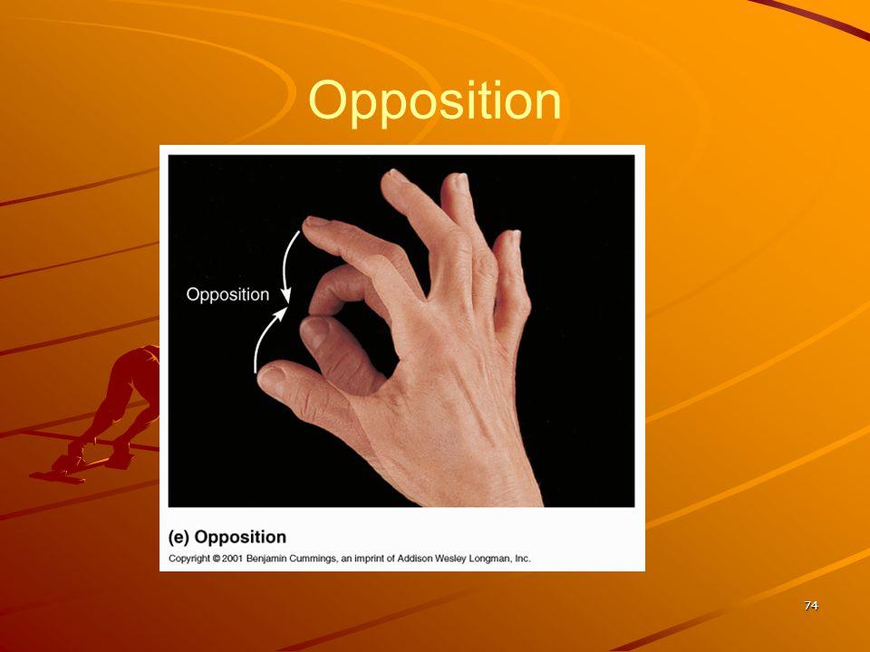 Opposition 74