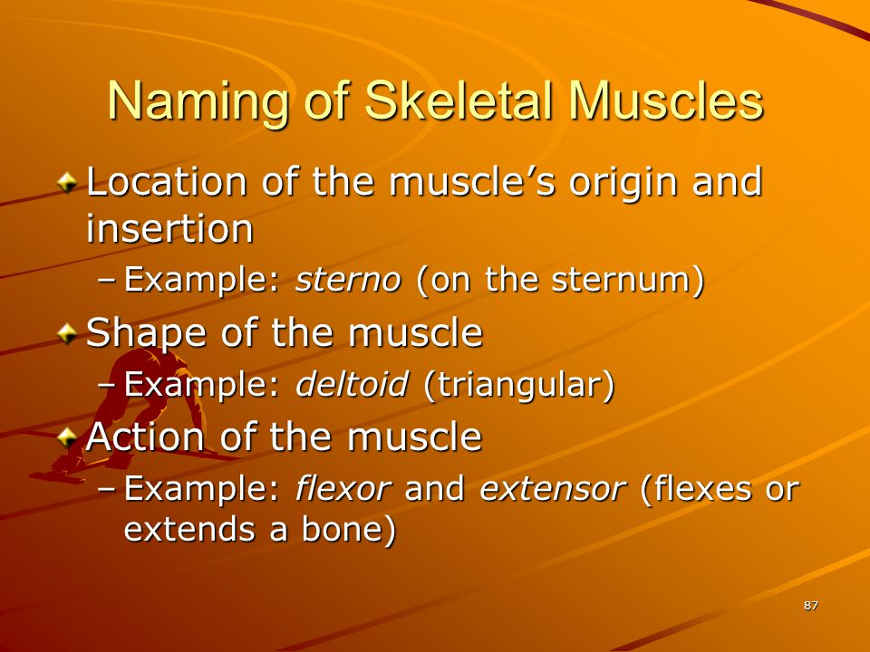 Naming of Skeletal Muscles Location of the muscle's origin and insertion –Example: sterno (on the sternum) Shape of the muscle –Example: deltoid (tria