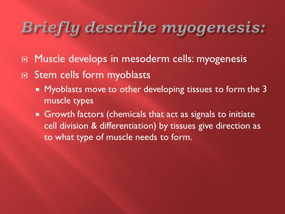  Muscle develops in mesoderm cells: myogenesis  Stem cells form myoblasts  Myoblasts move to other developing tissues to form the 3 muscle types  Growth factors (chemicals that act as signals to initiate cell division & differentiation) by tissues give direction as to what type of muscle needs to form.