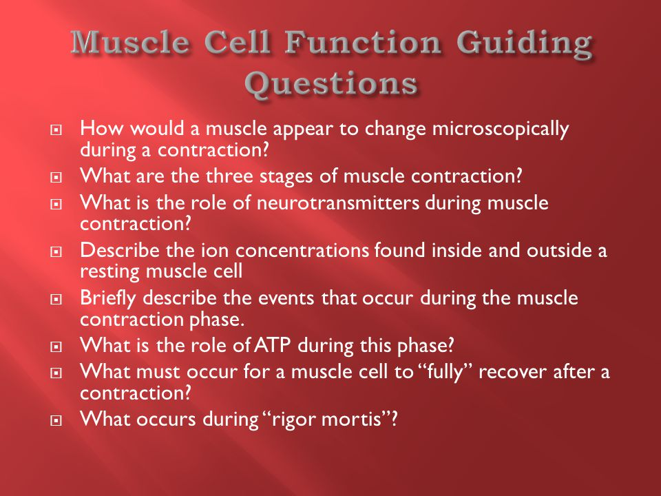  How would a muscle appear to change microscopically during a contraction.