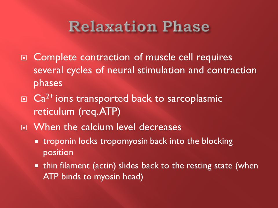  Complete contraction of muscle cell requires several cycles of neural stimulation and contraction phases  Ca 2+ ions transported back to sarcoplasmic reticulum (req.