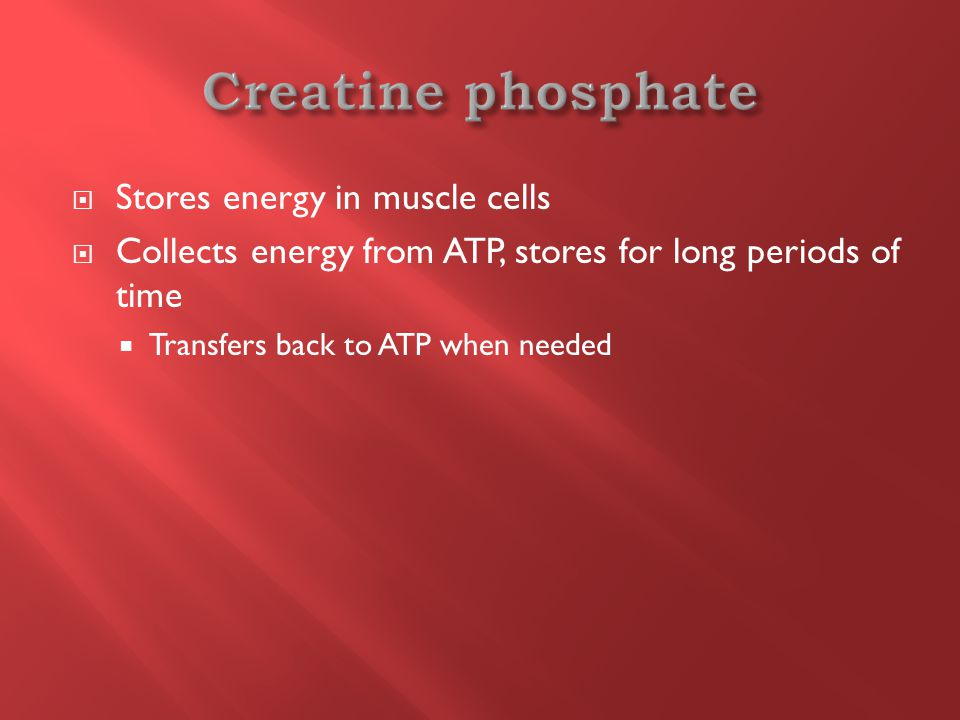  Stores energy in muscle cells  Collects energy from ATP, stores for long periods of time  Transfers back to ATP when needed