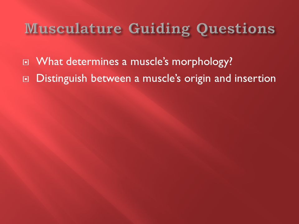  What determines a muscle's morphology  Distinguish between a muscle's origin and insertion