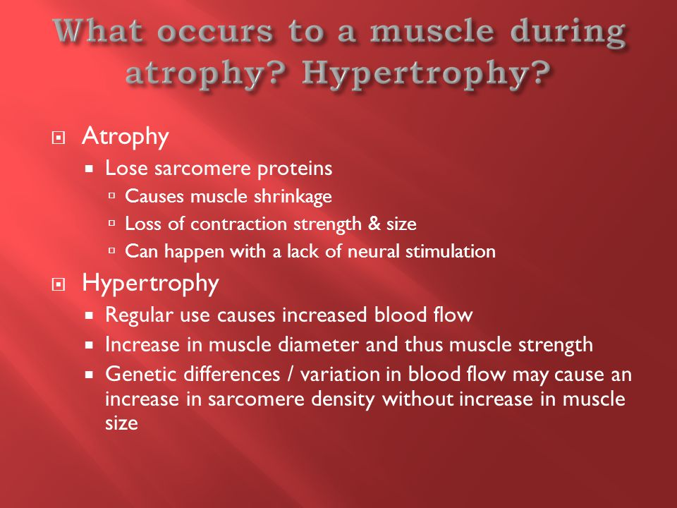  Atrophy  Lose sarcomere proteins  Causes muscle shrinkage  Loss of contraction strength & size  Can happen with a lack of neural stimulation  Hypertrophy  Regular use causes increased blood flow  Increase in muscle diameter and thus muscle strength  Genetic differences / variation in blood flow may cause an increase in sarcomere density without increase in muscle size