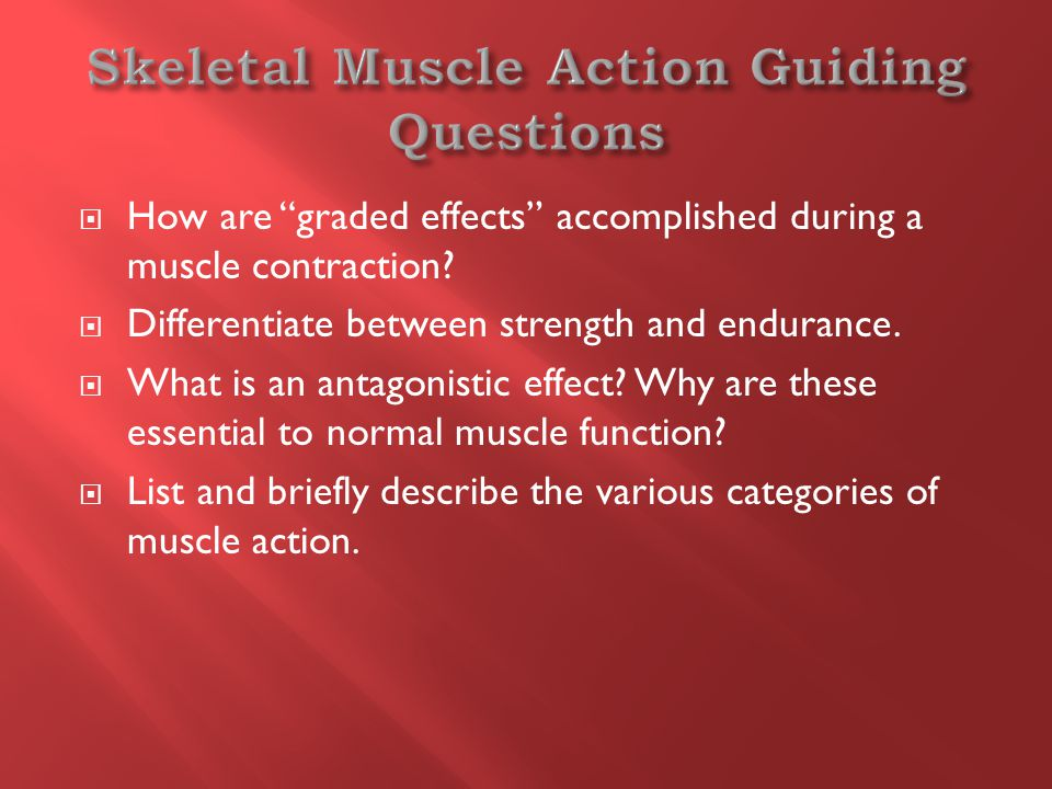  How are graded effects accomplished during a muscle contraction.