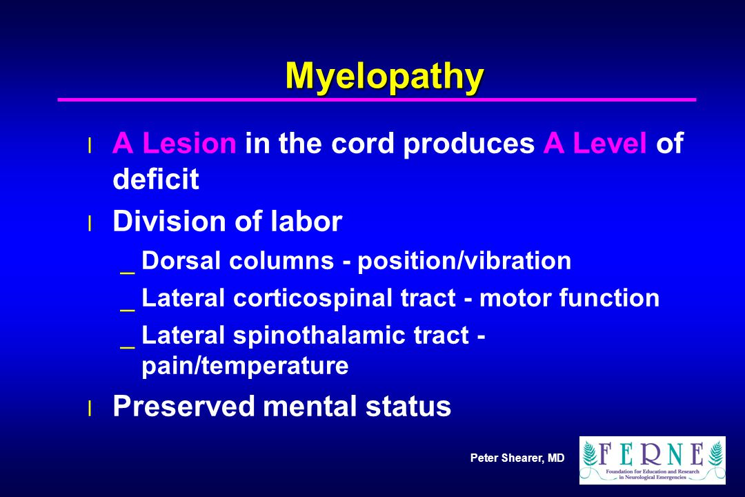 Peter Shearer, MD Myelopathy l A Lesion in the cord produces A Level of deficit l Division of labor _Dorsal columns - position/vibration _Lateral cort