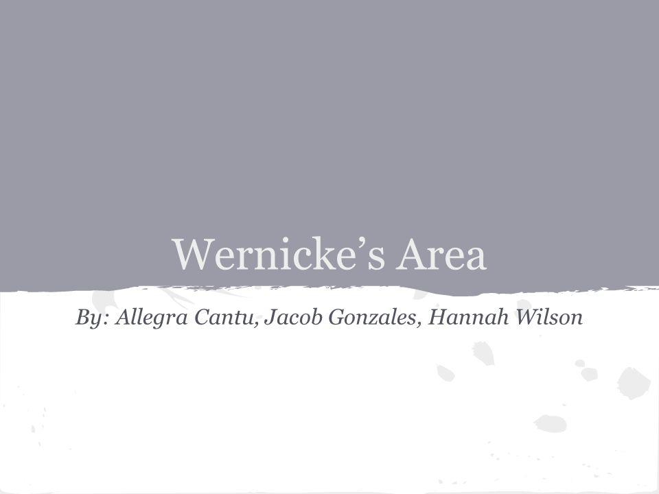 Wernicke's Area By: Allegra Cantu, Jacob Gonzales, Hannah Wilson