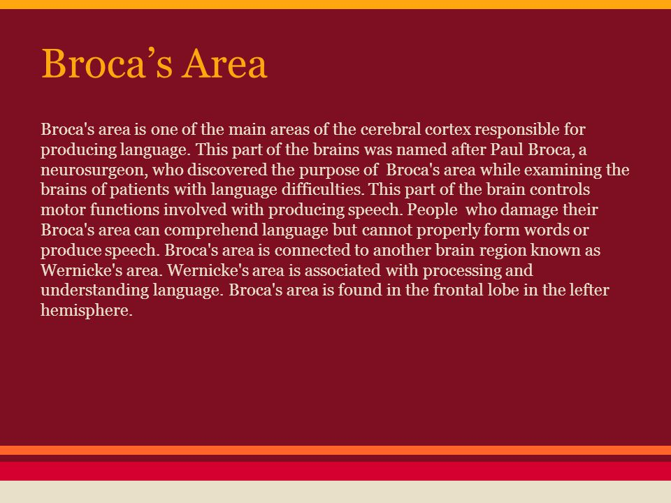 Broca's Area Broca's area is one of the main areas of the cerebral cortex responsible for producing language. This part of the brains was named after