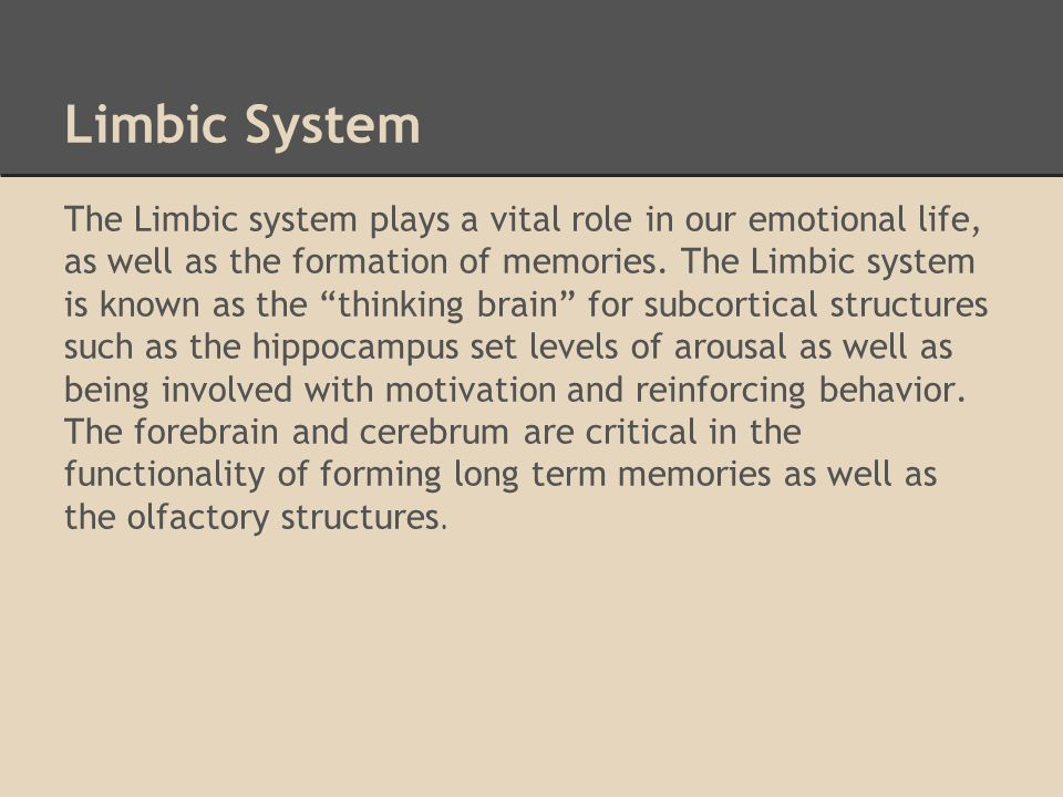 Limbic System The Limbic system plays a vital role in our emotional life, as well as the formation of memories.
