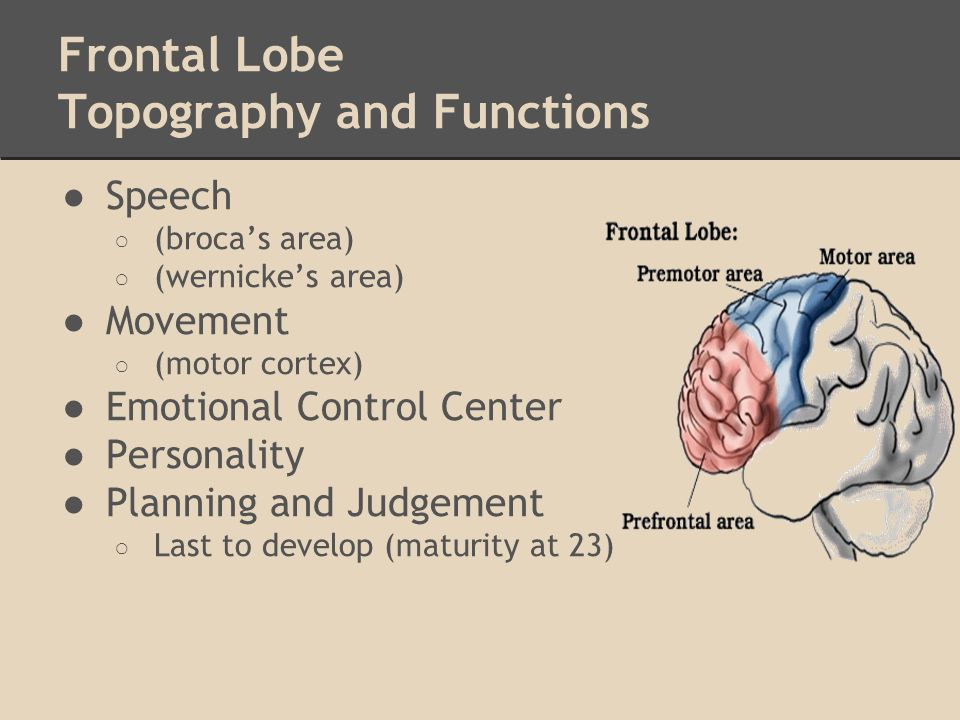 Frontal Lobe Topography and Functions ●Speech ○ (broca's area) ○ (wernicke's area) ●Movement ○ (motor cortex) ●Emotional Control Center ●Personality ●
