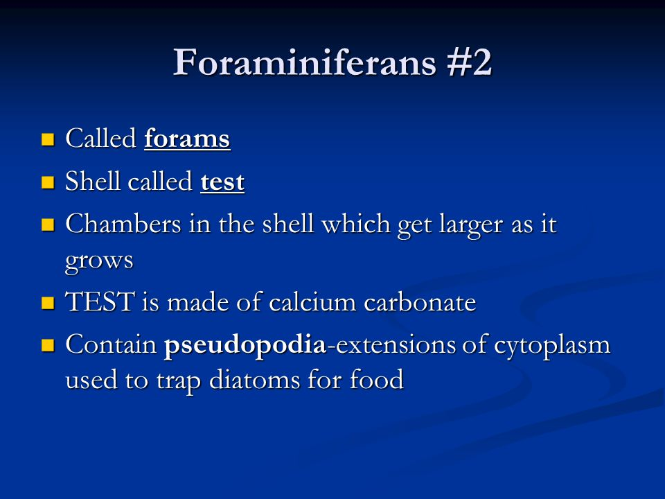 Foraminiferans #2 Called forams Called forams Shell called test Shell called test Chambers in the shell which get larger as it grows Chambers in the s