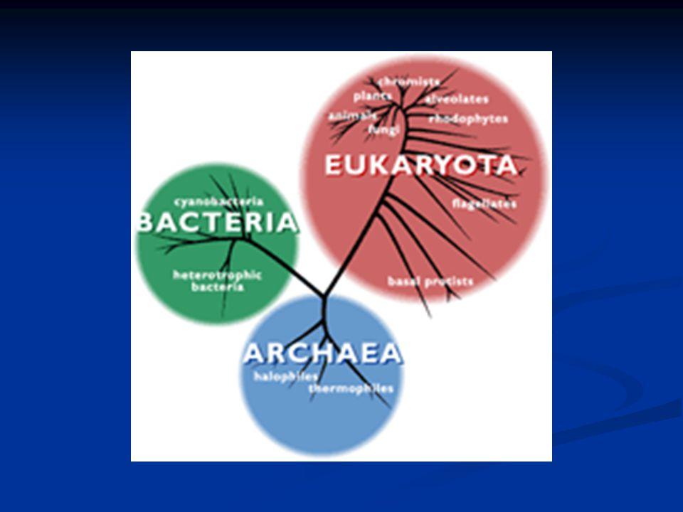5 Kingdoms (6 ?) Monera ? Monera ? Protista Protista Fungi Fungi Plantae Plantae Animalia Animalia
