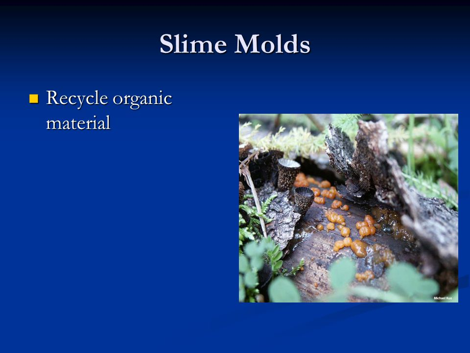 Slime Molds Recycle organic material Recycle organic material