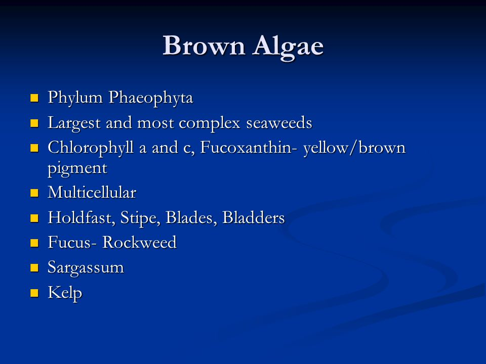 Brown Algae Phylum Phaeophyta Phylum Phaeophyta Largest and most complex seaweeds Largest and most complex seaweeds Chlorophyll a and c, Fucoxanthin-