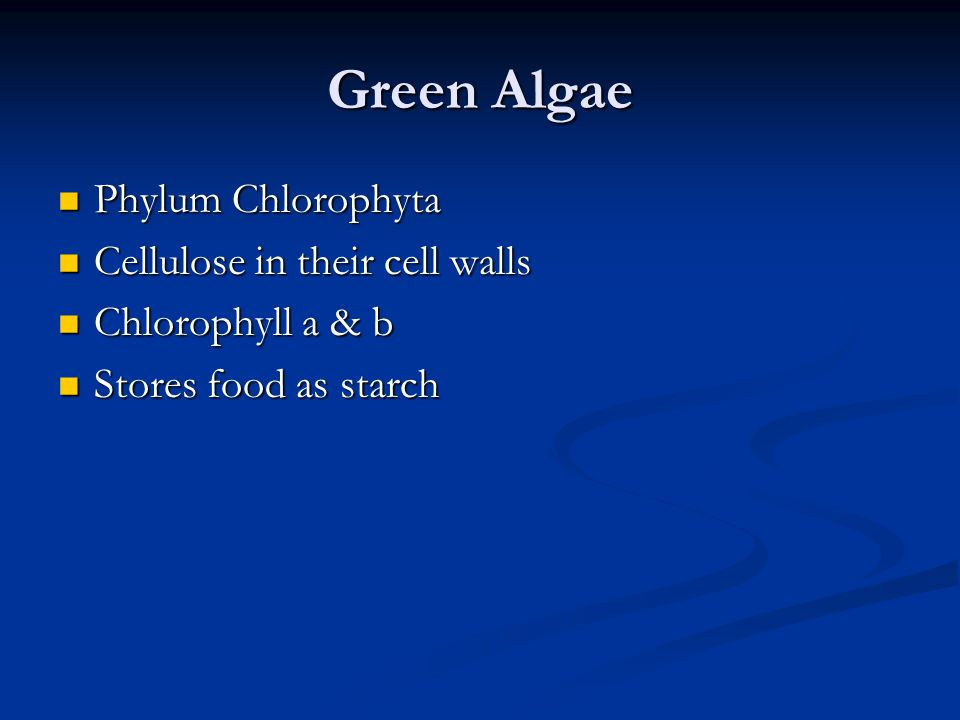 Green Algae Phylum Chlorophyta Phylum Chlorophyta Cellulose in their cell walls Cellulose in their cell walls Chlorophyll a & b Chlorophyll a & b Stor