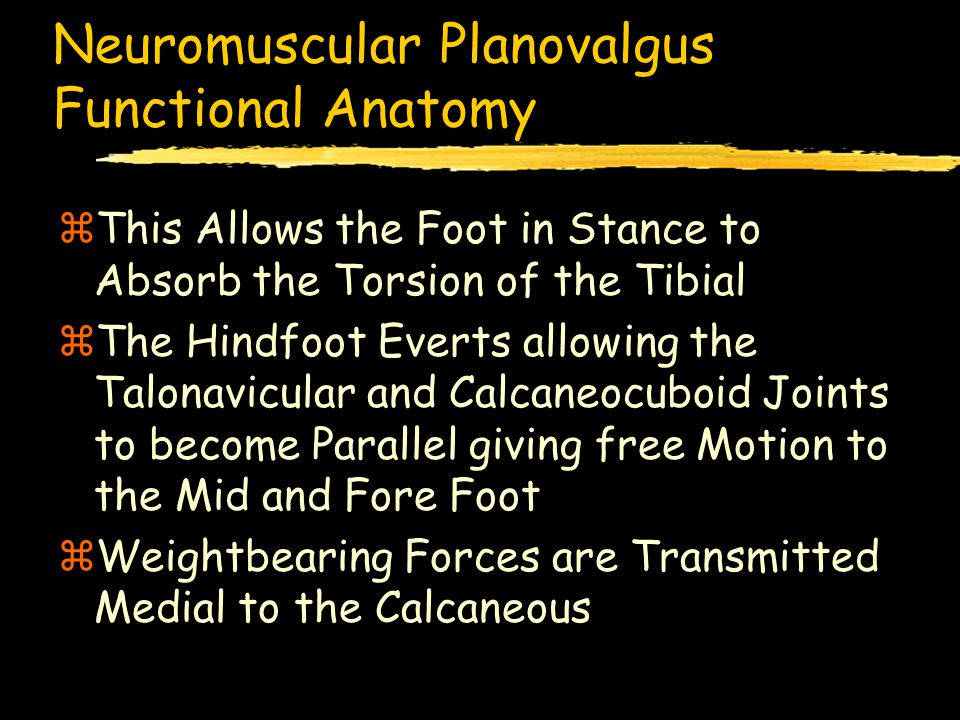 Neuromuscular Planovalgus Functional Anatomy zThis Allows the Foot in Stance to Absorb the Torsion of the Tibial zThe Hindfoot Everts allowing the Talonavicular and Calcaneocuboid Joints to become Parallel giving free Motion to the Mid and Fore Foot zWeightbearing Forces are Transmitted Medial to the Calcaneous