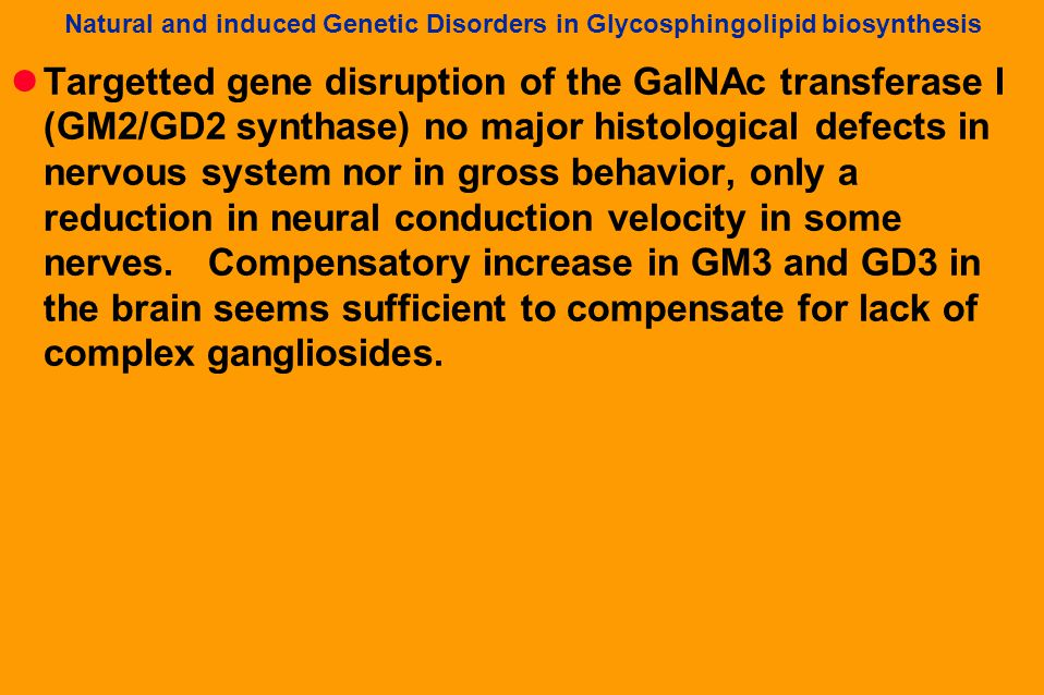Natural and induced Genetic Disorders in Glycosphingolipid biosynthesis Targetted gene disruption of the GalNAc transferase I (GM2/GD2 synthase) no major histological defects in nervous system nor in gross behavior, only a reduction in neural conduction velocity in some nerves.