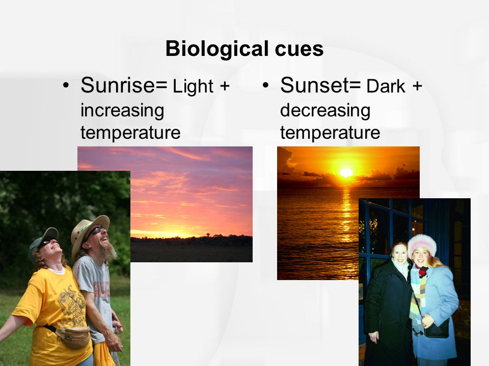 Biological cues Sunrise= Light + increasing temperature Sunset= Dark + decreasing temperature