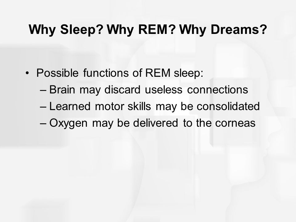 Why Sleep. Why REM. Why Dreams.