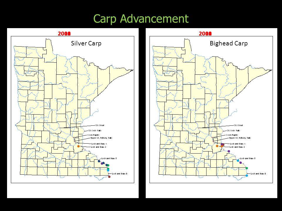 Silver CarpBighead Carp Carp Advancement 2008 2010 2009 2011 2012 2013 2014