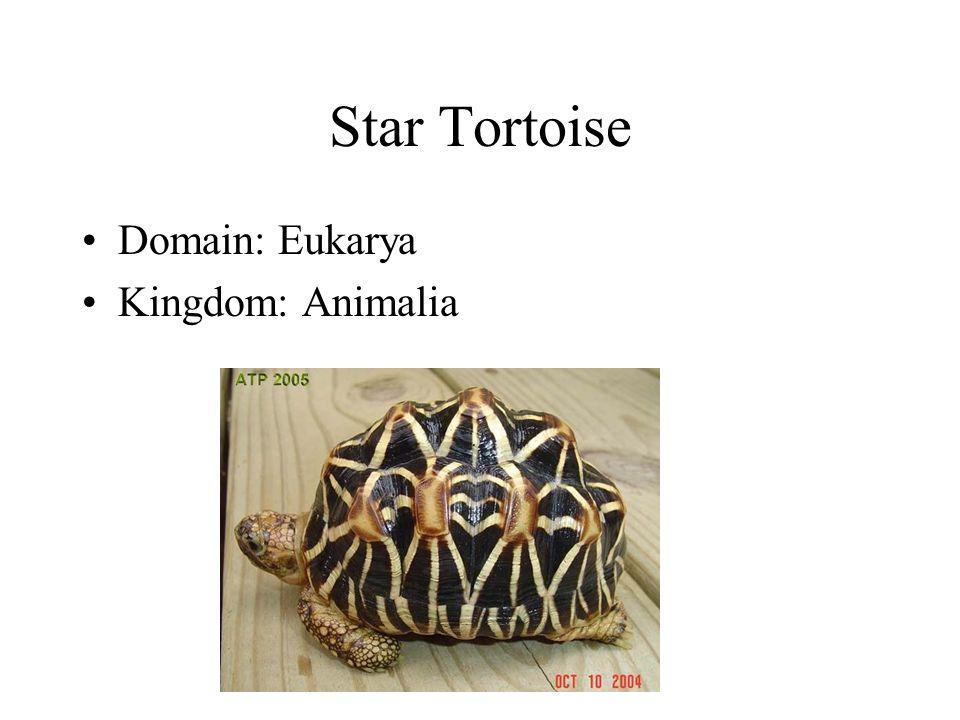 Star Tortoise Domain: Eukarya Kingdom: Animalia