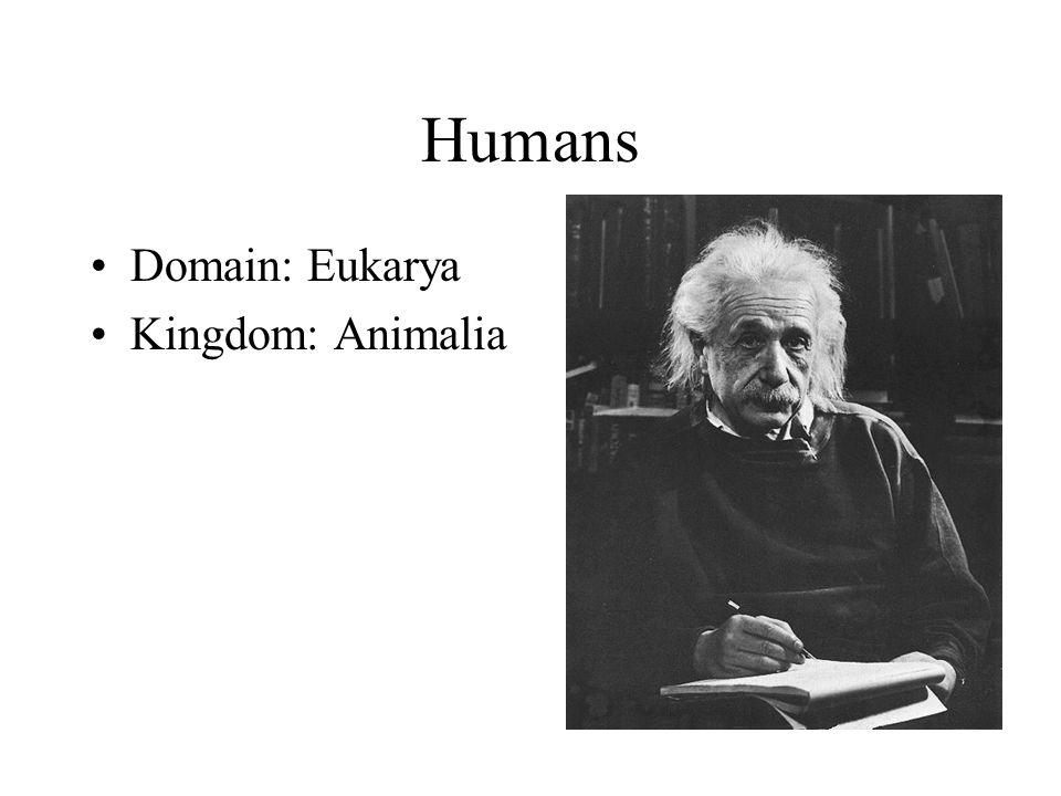 Humans Domain: Eukarya Kingdom: Animalia