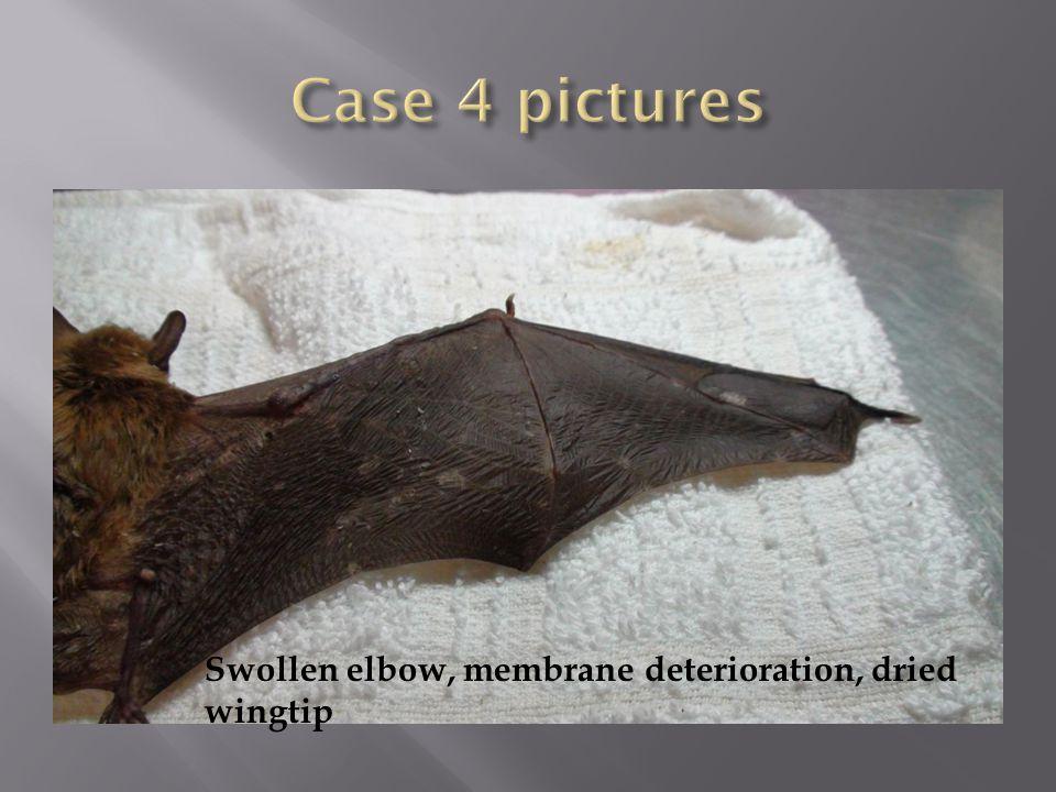 Swollen elbow, membrane deterioration, dried wingtip