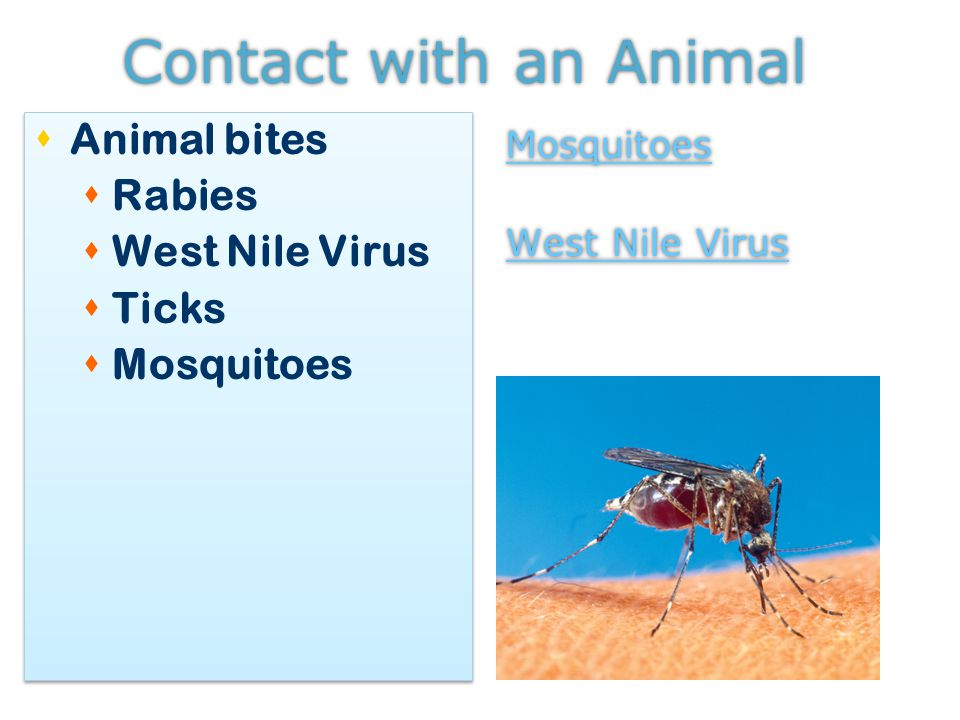Contact with an Animal  Animal bites  Rabies  West Nile Virus  Ticks  Mosquitoes  Animal bites  Rabies  West Nile Virus  Ticks  Mosquitoes Mosquitoes West Nile Virus Mosquitoes West Nile Virus