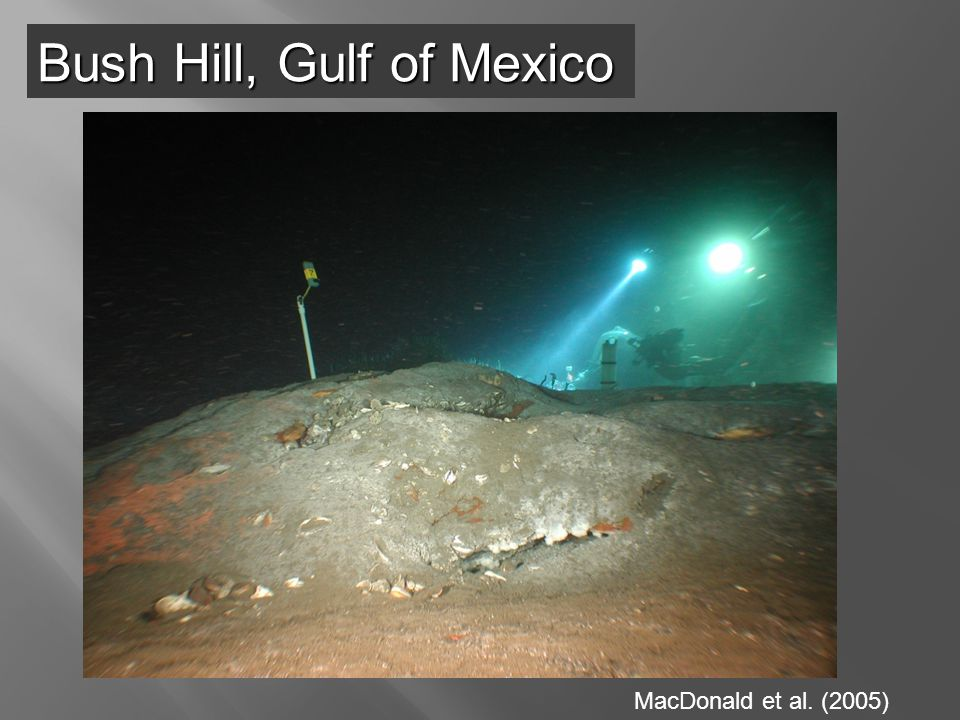 MacDonald et al. (2005) Bush Hill, Gulf of Mexico