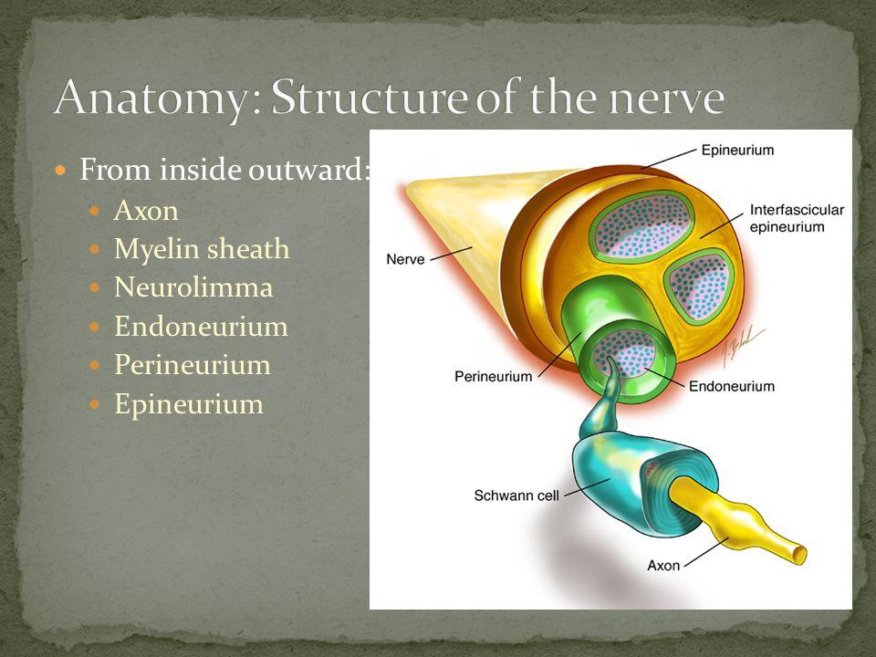 From inside outward: Axon Myelin sheath Neurolimma Endoneurium Perineurium Epineurium