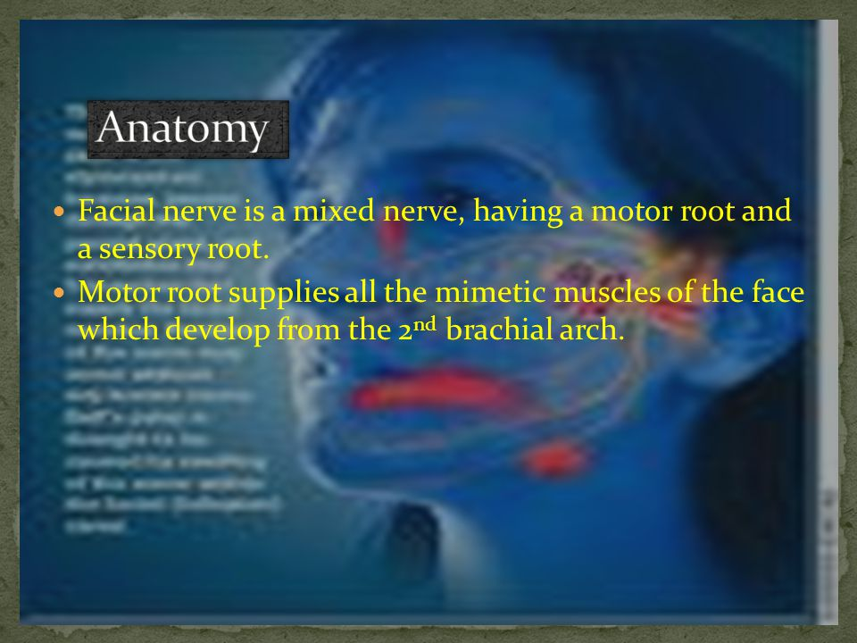 Sensory root nerve of Wrisberg carries taste fibers from the anterior 2/3 of the tongue and general sensation from the concha and retroauricular skin.
