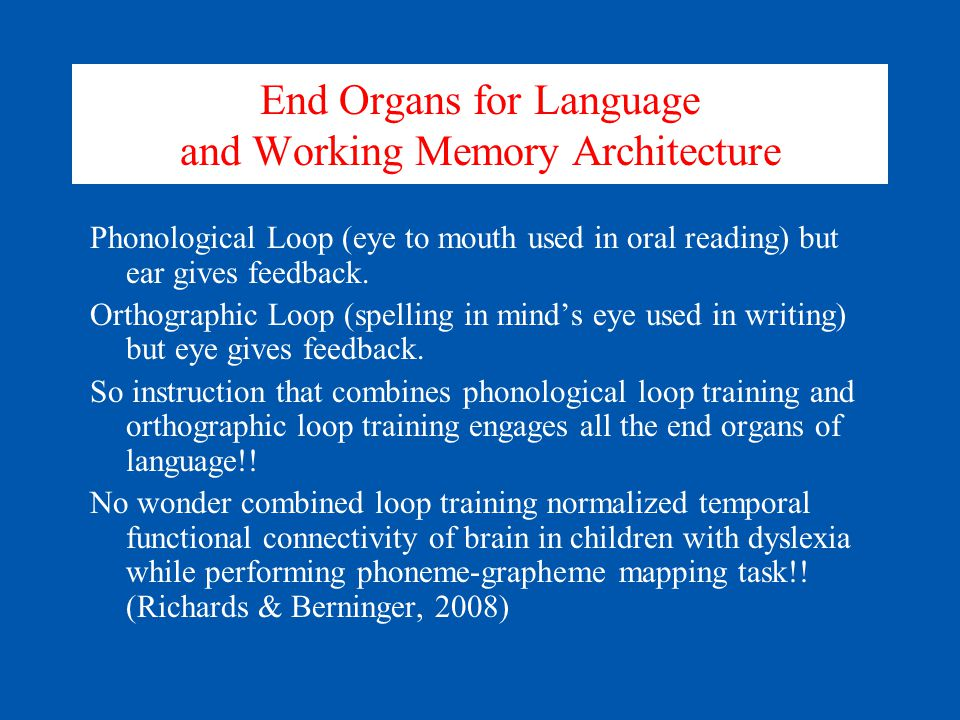 End Organs for Language and Working Memory Architecture Phonological Loop (eye to mouth used in oral reading) but ear gives feedback. Orthographic Loo