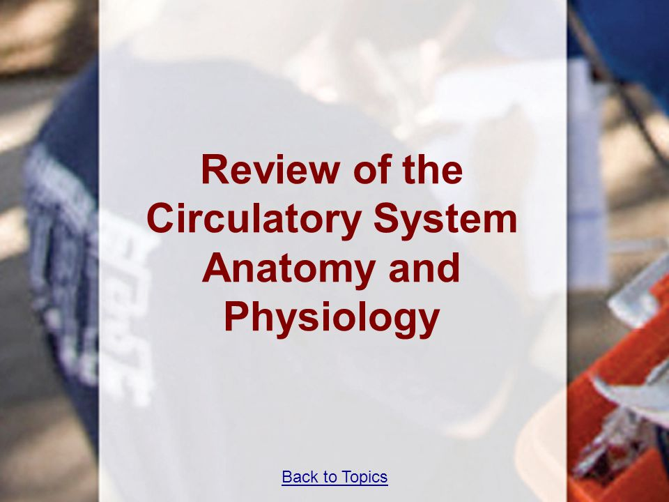 Back to Topics Review of the Circulatory System Anatomy and Physiology