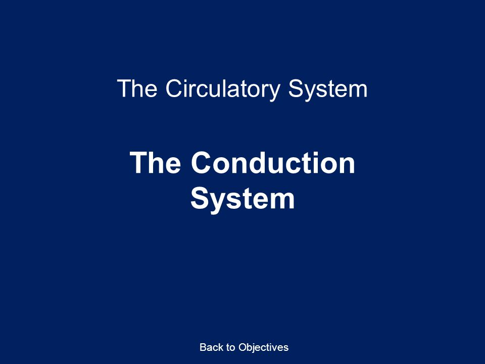 The Circulatory System The Conduction System Back to Objectives