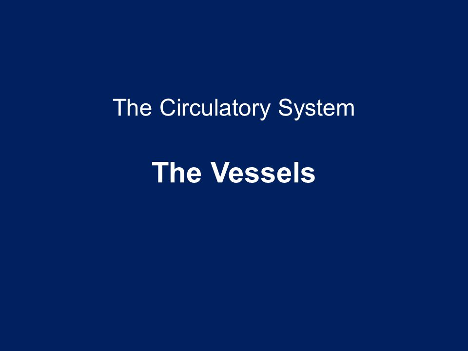 The Circulatory System The Vessels
