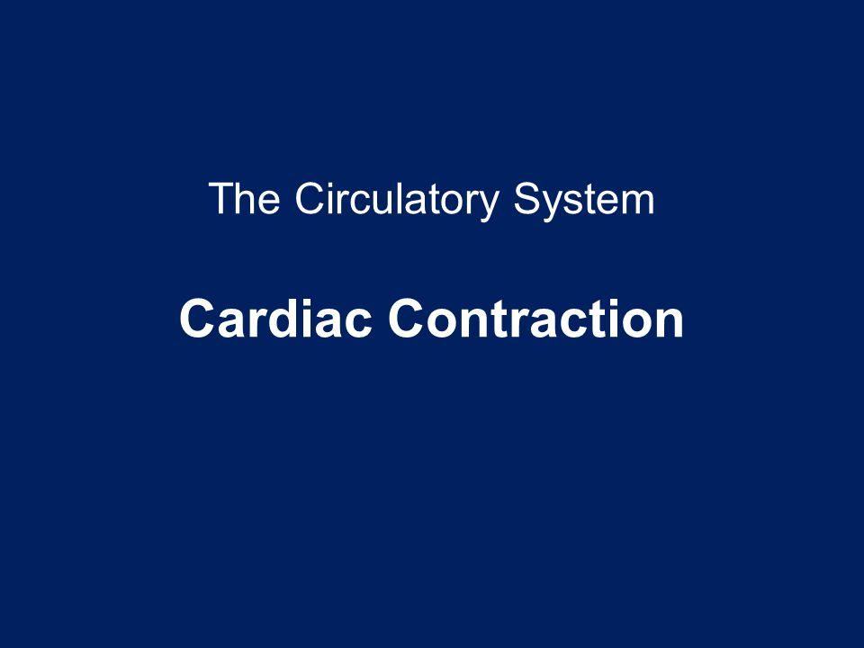 The Circulatory System Cardiac Contraction