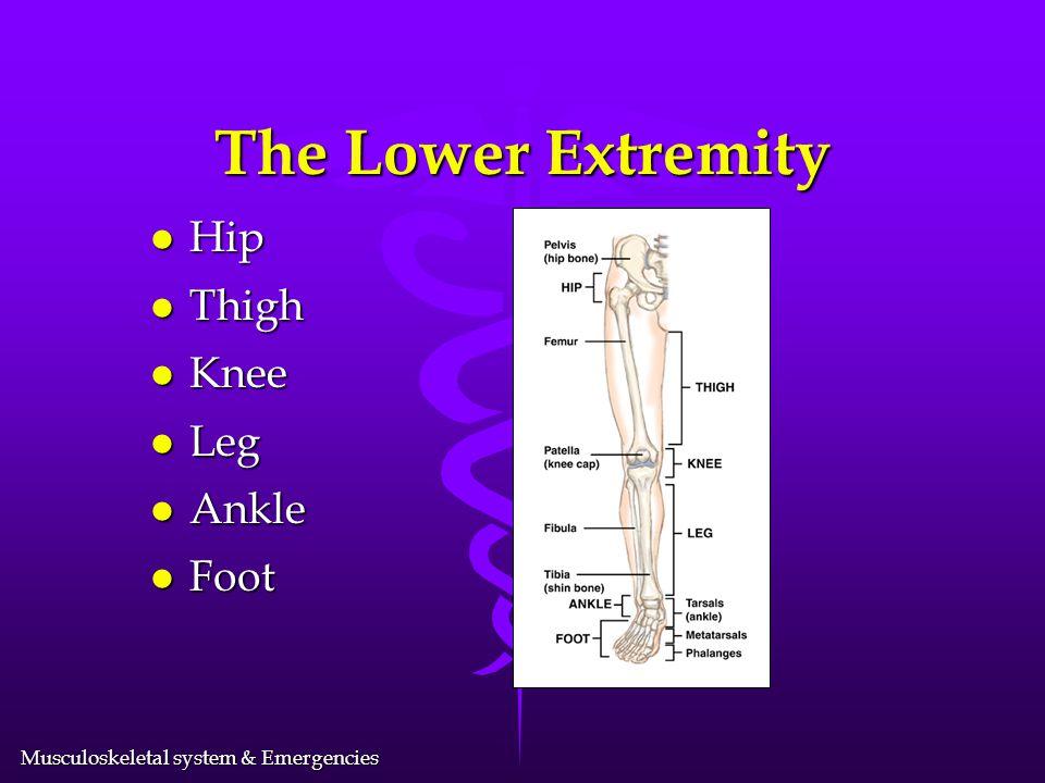 Musculoskeletal system & Emergencies The Pelvis
