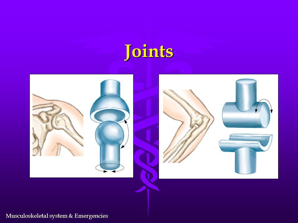 Musculoskeletal system & Emergencies The Upper Extremity l Shoulder girdle l Arm l Elbow l Forearm l Wrist l Hand