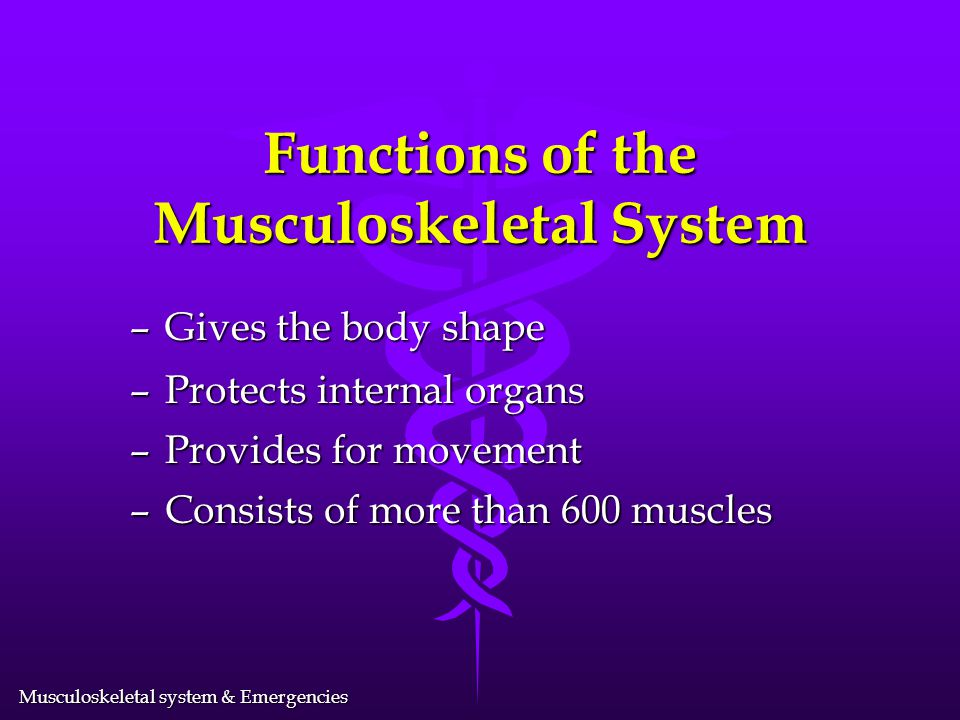 Musculoskeletal system & Emergencies Functions of the Musculoskeletal System – Gives the body shape – Protects internal organs – Provides for movement – Consists of more than 600 muscles