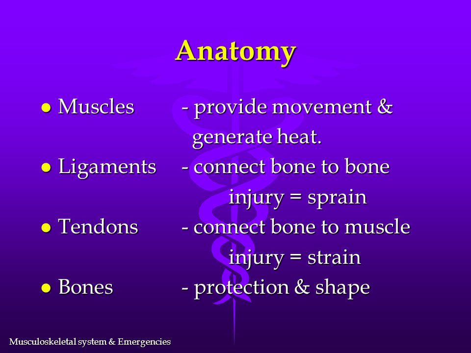 Musculoskeletal system & Emergencies Anatomy l Muscles- provide movement & generate heat.